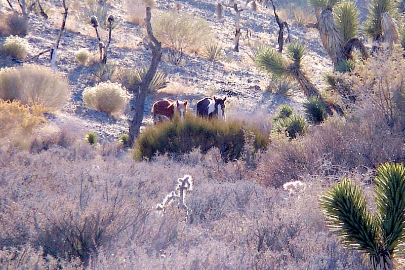 Save the Wild Horses -