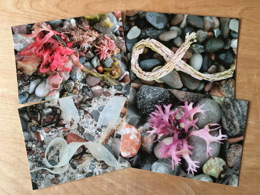 """- Fast forward to April and good friends, Marilyn and Bill Copland were round and commented on the framed photos of seaweed from Iona in 2015; """"You must make these available - give other people the opportunity to appreciate this"""". Two weeks later, I had a batch of cards printed via Snapfish."""
