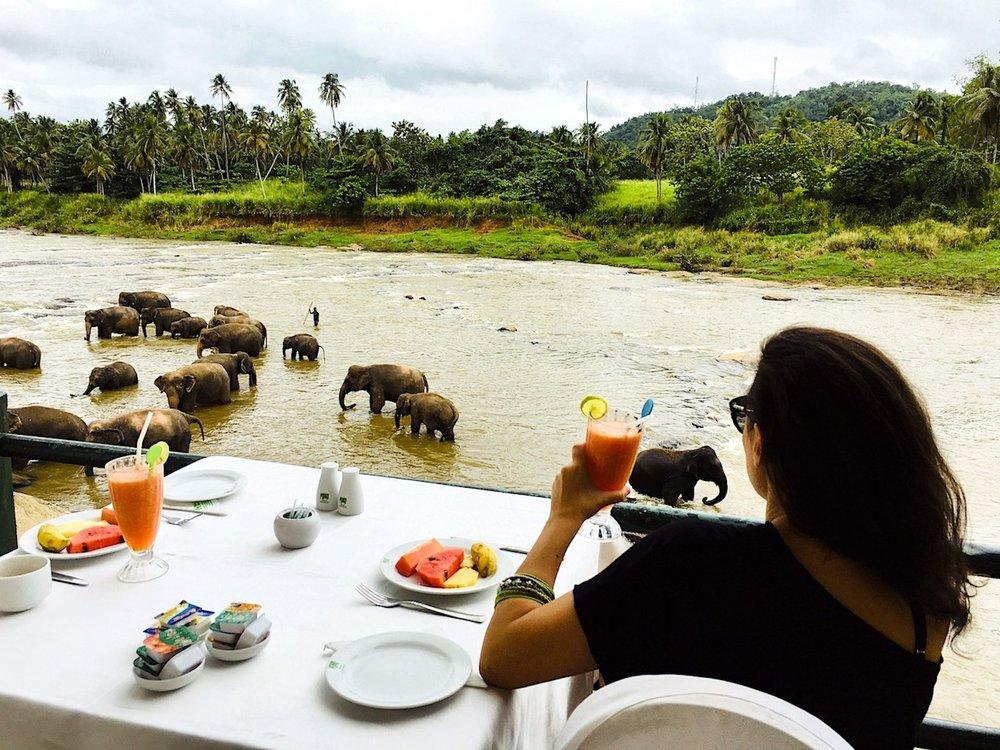 O que fazer no Sri Lanka? Que tal um café com elefantes? Foto: David Mattatia