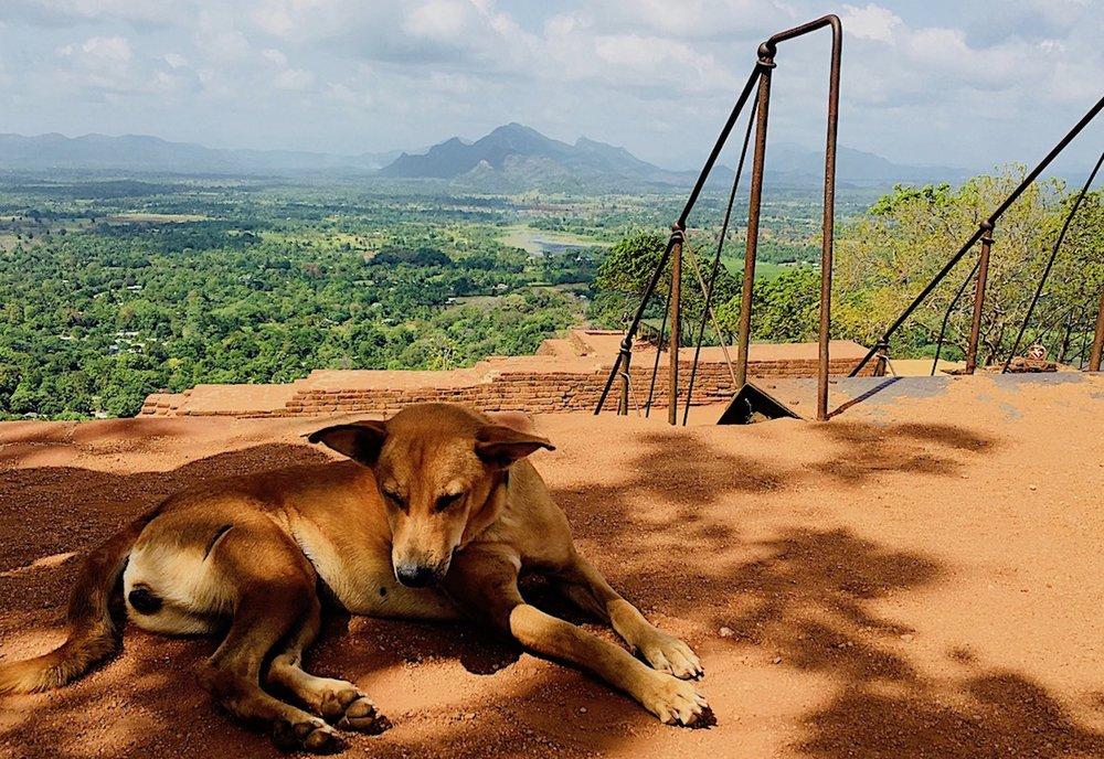 Topo de Sigiriya. Nem todo mundo está interessado na vista. Foto: Patti Neves