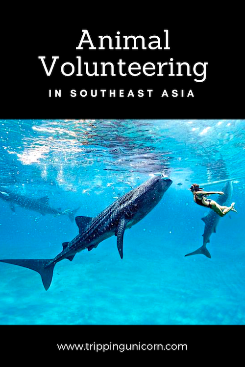 Volunteering with animals in Southeast Asia. Photo:  HannaStocking