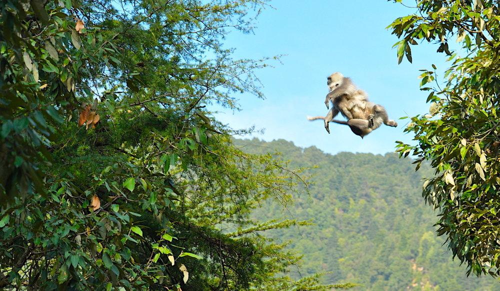 Kashmir acrobat in McLeod Ganj, India. Photo: David Mattatia