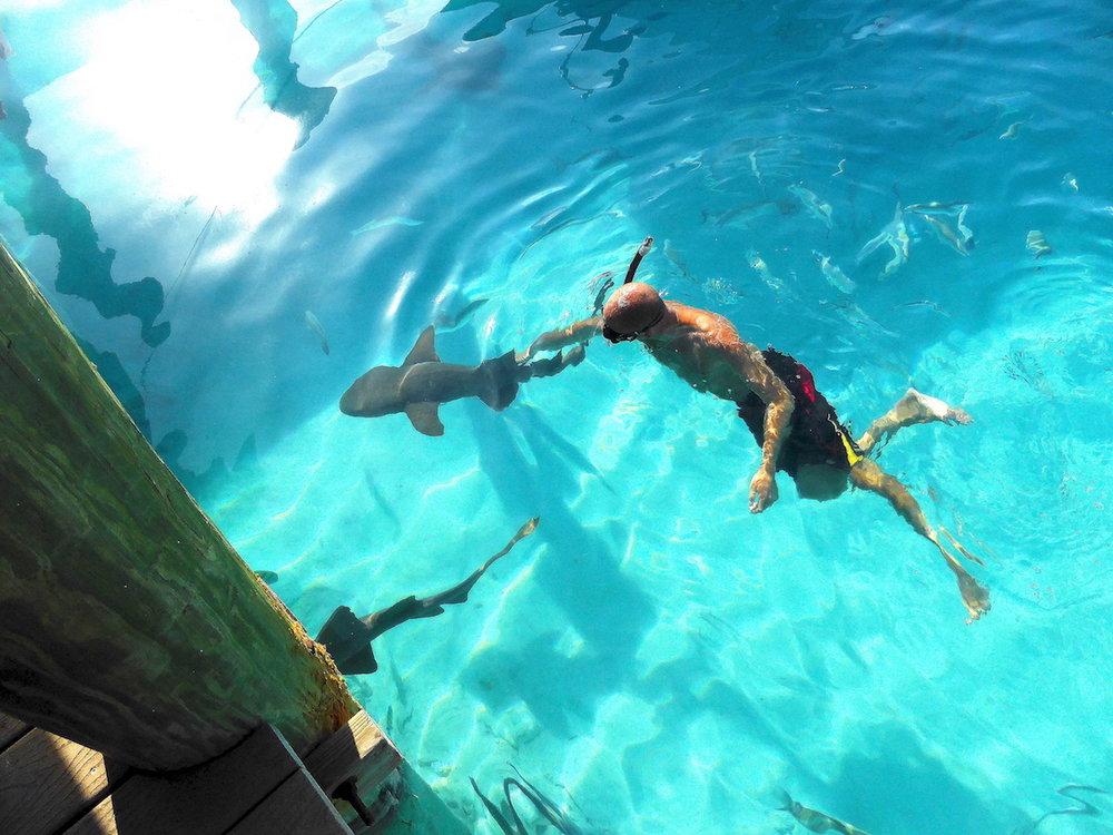 O marido, com os nurse sharks. Foto: Patti Neves