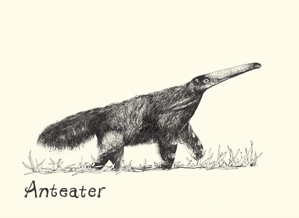 Karen's anteater.jpg