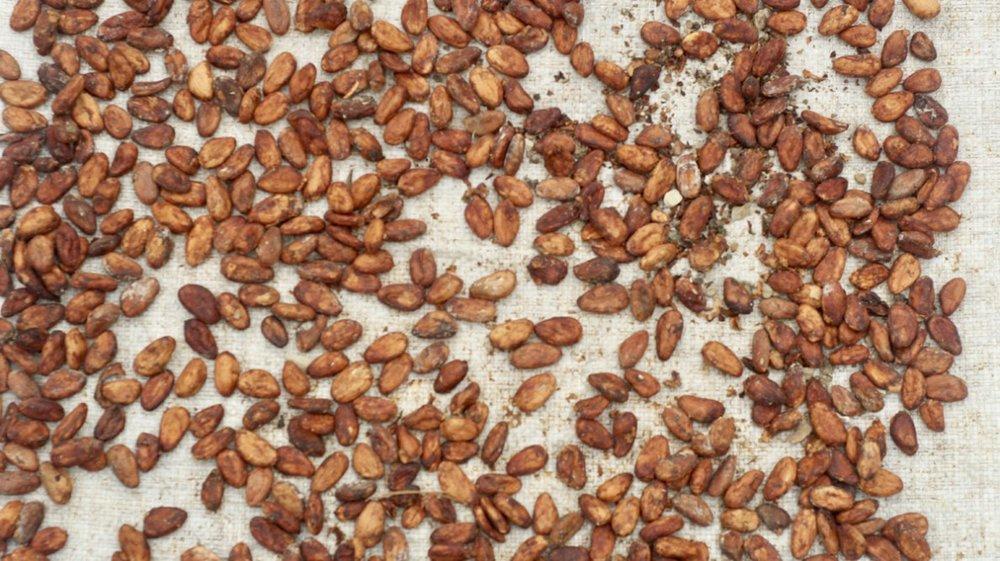 fermented_cocoa.jpg