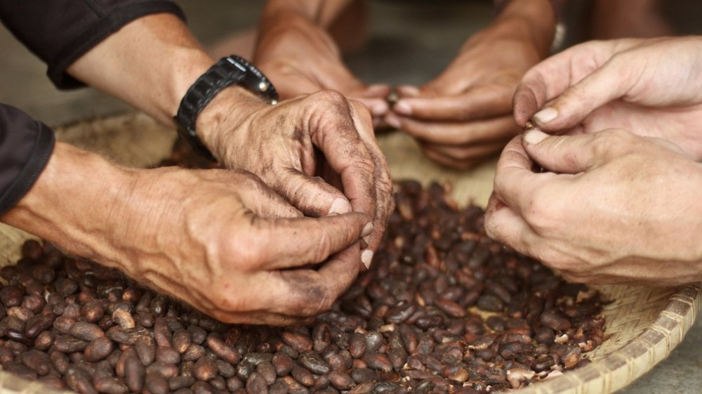 peeling_cocoa.jpg