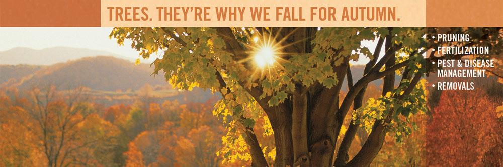 featured_bartlett_autumn_trees.jpg