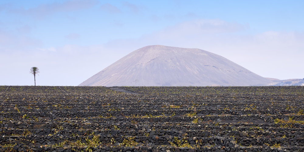Viñedo volcánico.jpg