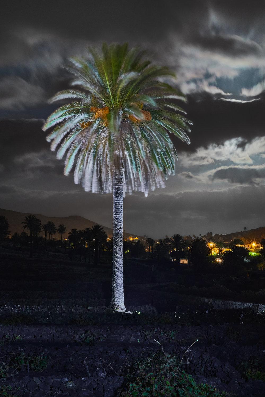 Valle de las mil palmeras_17-10-06_0006.jpg