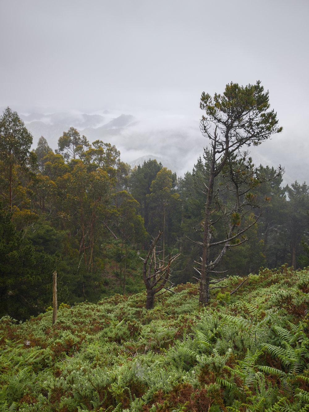 Bosque asturiano.jpg