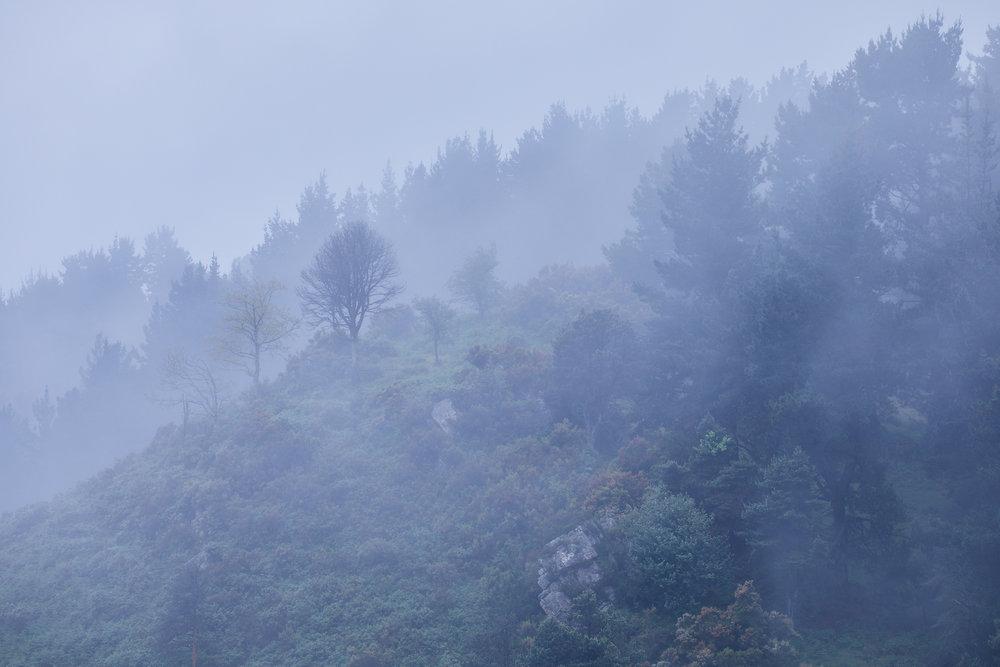 Bosque mistico.jpg
