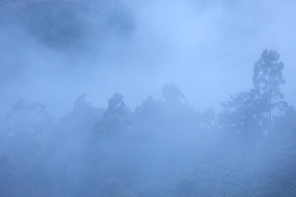 Entre la niebla.jpg