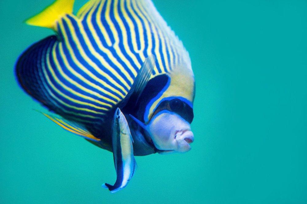 Fish-Ella-ugly