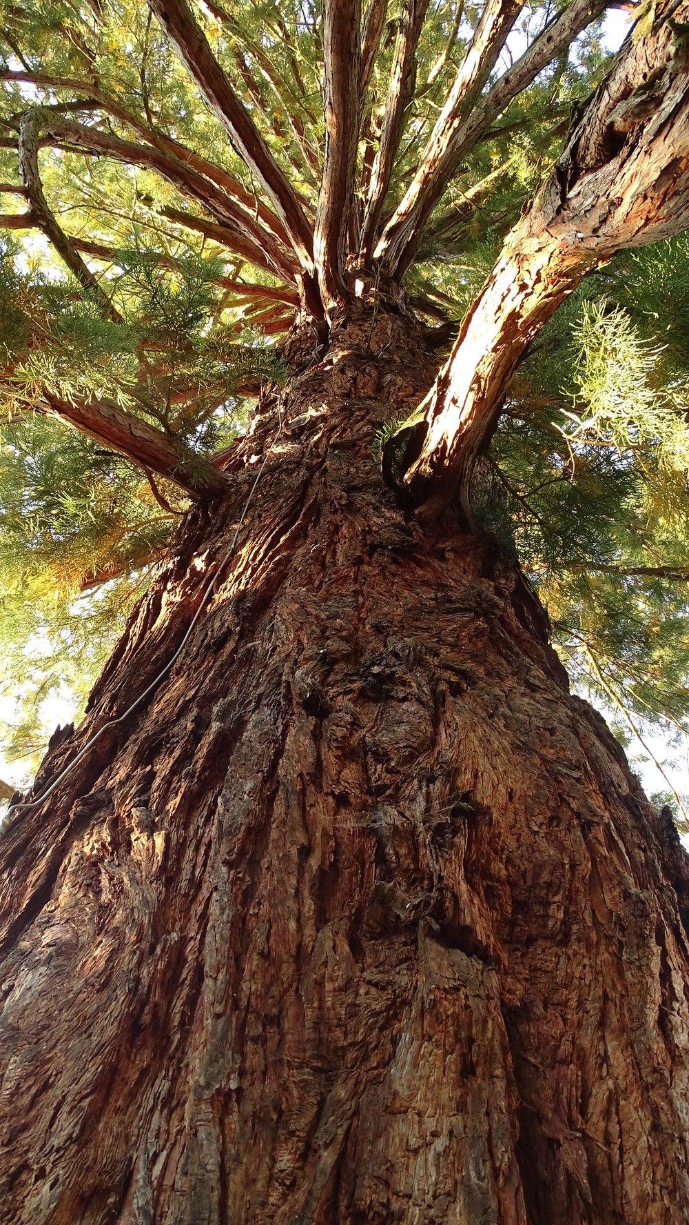 tree-2049877_1920.jpg