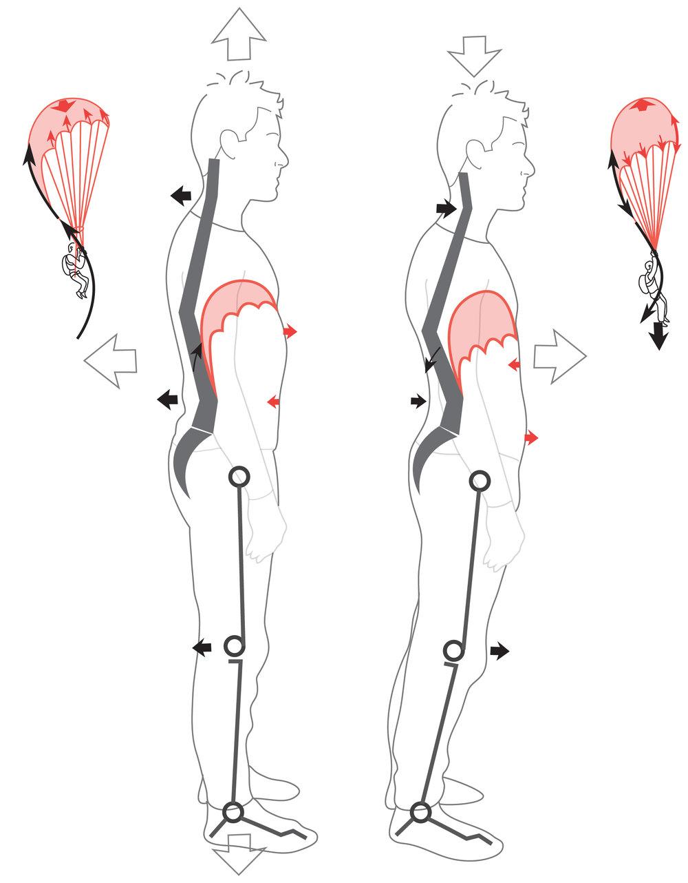 Mécanique de la respiration selon Philippe Campignion, basée sur la méthode G.D.S.