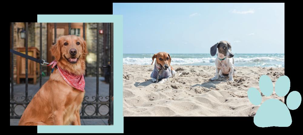 Dogs+Of+MKE+Milwaukee+Pet+Photography+Jen+OHara+The+Shop