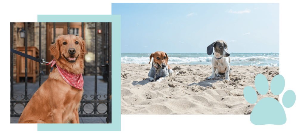 Dogs+Of+MKE+Milwaukee+Pet+Photography+Jen+OHara+The+Shop-min.png