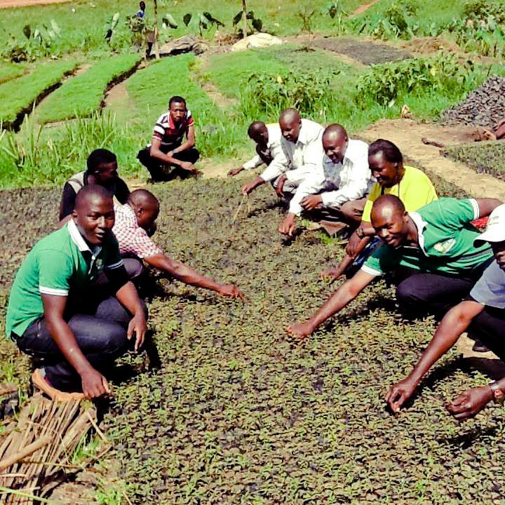 Tree Nursery in Kasese, Uganda