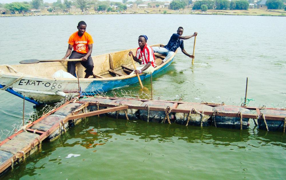 Caged Fish Farming in Lake Edward, Western Uganda
