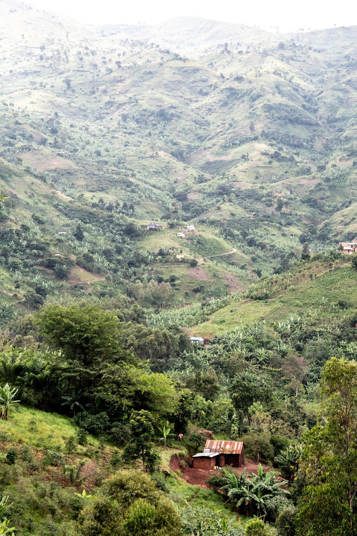 Rwenzori Mountains of Western Uganda