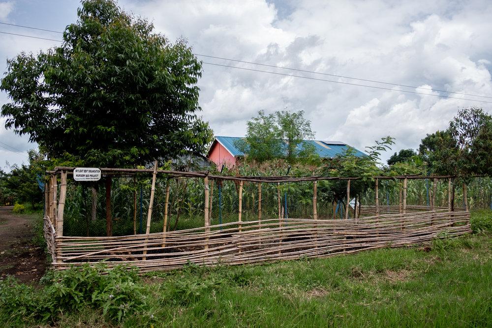 Solutions Fund Tree Nursery in Kasese, Uganda
