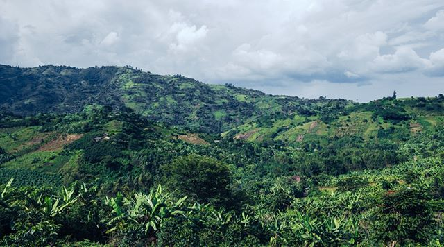 Cultivating Environmental Solutions, Worldwide.⠀⠀⠀⠀⠀⠀⠀⠀⠀ .⠀⠀⠀⠀⠀⠀⠀⠀⠀ This landscape in Uganda has been touched by humans. It can either be destroyed or transformed in the near future. We are trying to ensure that the latter is the case by empowering and educating communities to practice responsible and sustainable development. ⠀⠀⠀⠀⠀⠀⠀⠀⠀ .⠀⠀⠀⠀⠀⠀⠀⠀⠀ Visit our website for more info on how you can donate and become a member of our movement! Link in Bio.⠀⠀⠀⠀⠀⠀⠀⠀⠀ .⠀⠀⠀⠀⠀⠀⠀⠀⠀ .⠀⠀⠀⠀⠀⠀⠀⠀⠀ .⠀⠀⠀⠀⠀⠀⠀⠀⠀ #thinkglobalactlocal #nonprofit #environmental #ngo #climatechange #environment #change #action #community #IDEASforUs #sustainability  #SDGs #people #sustainabledevelopmentgoals #globalgoals #equality #green #nonprofit #humanitarian #solutions #local #hyperlocal