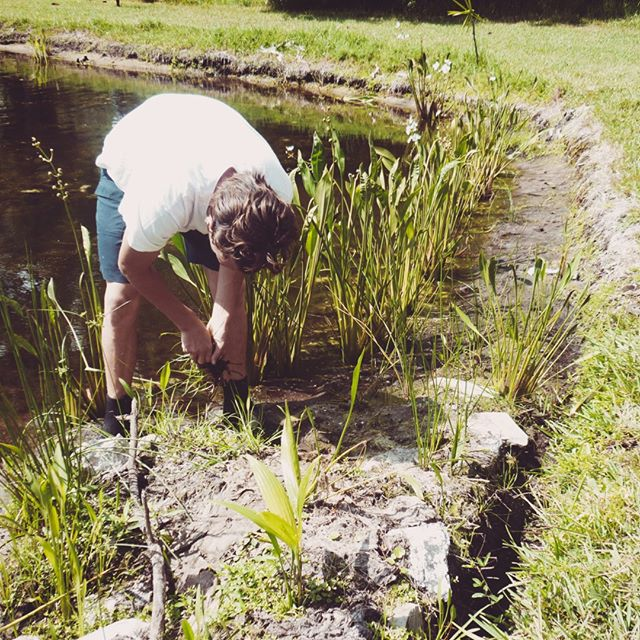 Your neighborhood retention pond doesn't have to be so ugly. We are planting a native litoral zone to provide habitat for native wildlife, while beautifying the community and its housing areas. ⠀⠀⠀⠀⠀⠀⠀⠀⠀ .⠀⠀⠀⠀⠀⠀⠀⠀⠀ Visit our website for more info on how you can donate and become a member of our movement! Link in Bio.⠀⠀⠀⠀⠀⠀⠀⠀⠀ .⠀⠀⠀⠀⠀⠀⠀⠀⠀ .⠀⠀⠀⠀⠀⠀⠀⠀⠀ .⠀⠀⠀⠀⠀⠀⠀⠀⠀ #thinkglobalactlocal #nonprofit #environmental #ngo #climatechange #environment #change #action #community #IDEASforUs #sustainability  #SDGs #people #sustainabledevelopmentgoals #globalgoals #equality #green #nonprofit #humanitarian #solutions #local #hyperlocal