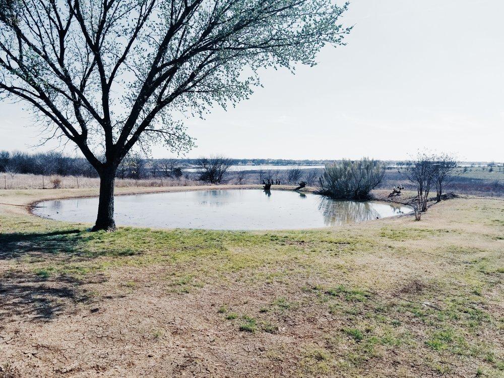 Lakeside_Visit_Pond