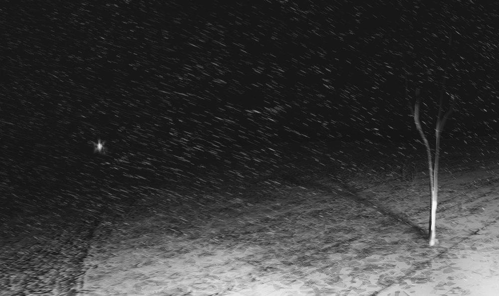 burak-cinar-snow-tree.jpg