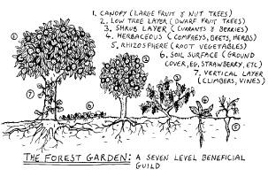 2.1.2_foodforest.jpg