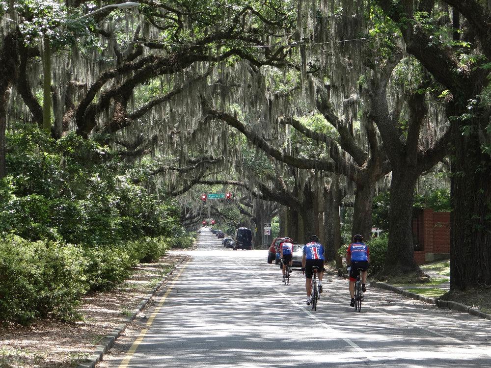 Savannah 65229.jpg