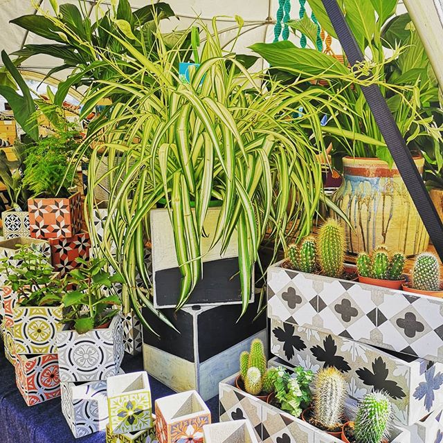 Feels like summer again this morning! We're enjoying the sun as we get ready for a lovely day at #sampleAUTUMN - we're just next to North Greenwich tube if you'd like to come and visit. Today we're mainly about the pots (busting out these colourful small cubes to enjoy the sunshine) 🌱🌱🌵 #houseplantsofinstagram #sampleautumn #peninsulist #greenwichpeninsula #plantpots #plantsmakepeoplehappy #summer #seraxbelgium #northgreenwich