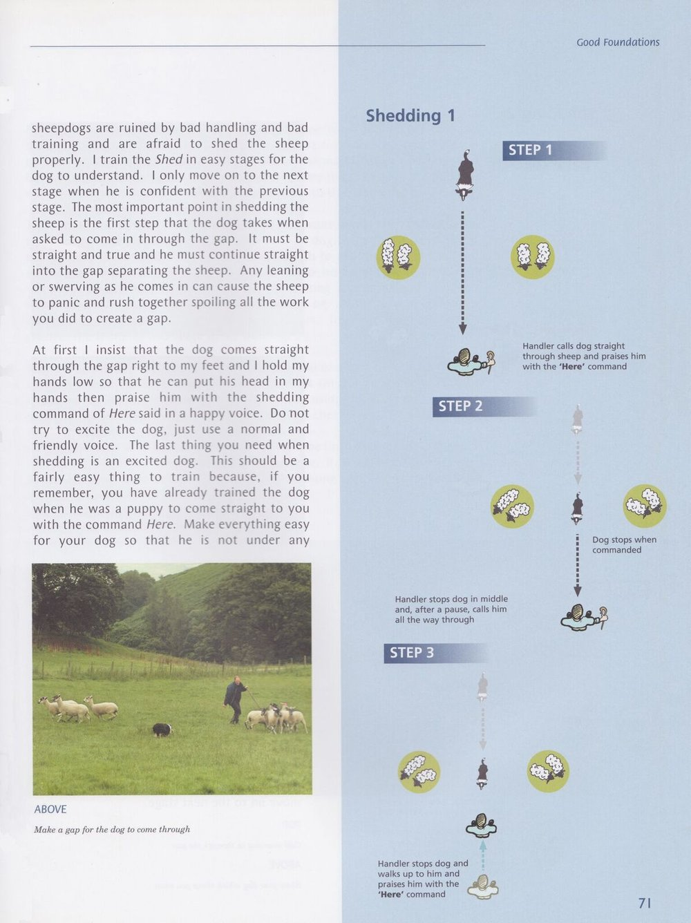 Talking sheep dogs page