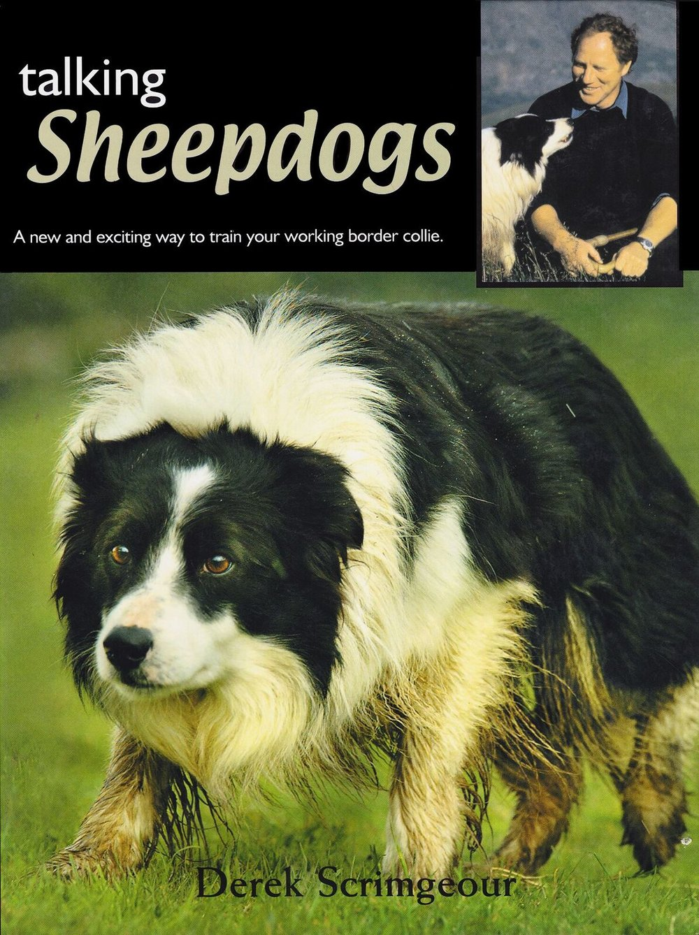 Talking sheep dogs