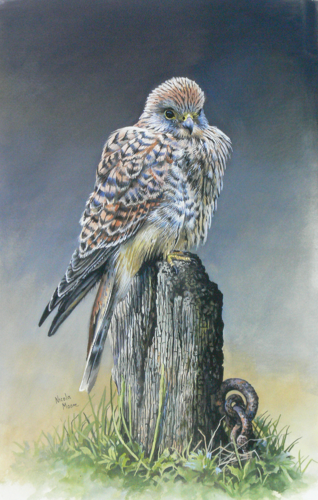 Kestrel after the Storm.jpg