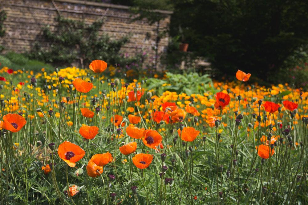 PRESTON, LANCASHIRE - Wild Flower  Courtyard