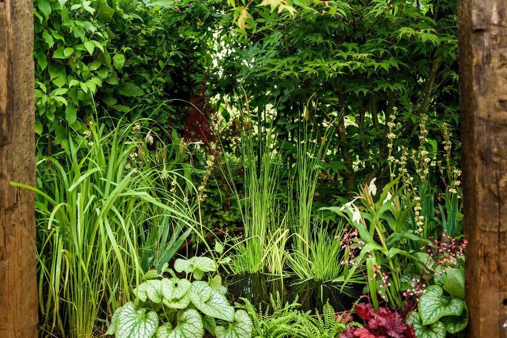 PC-GardenersWorld2018-040.jpg