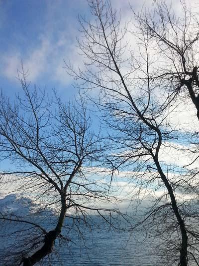 Winter Peachland