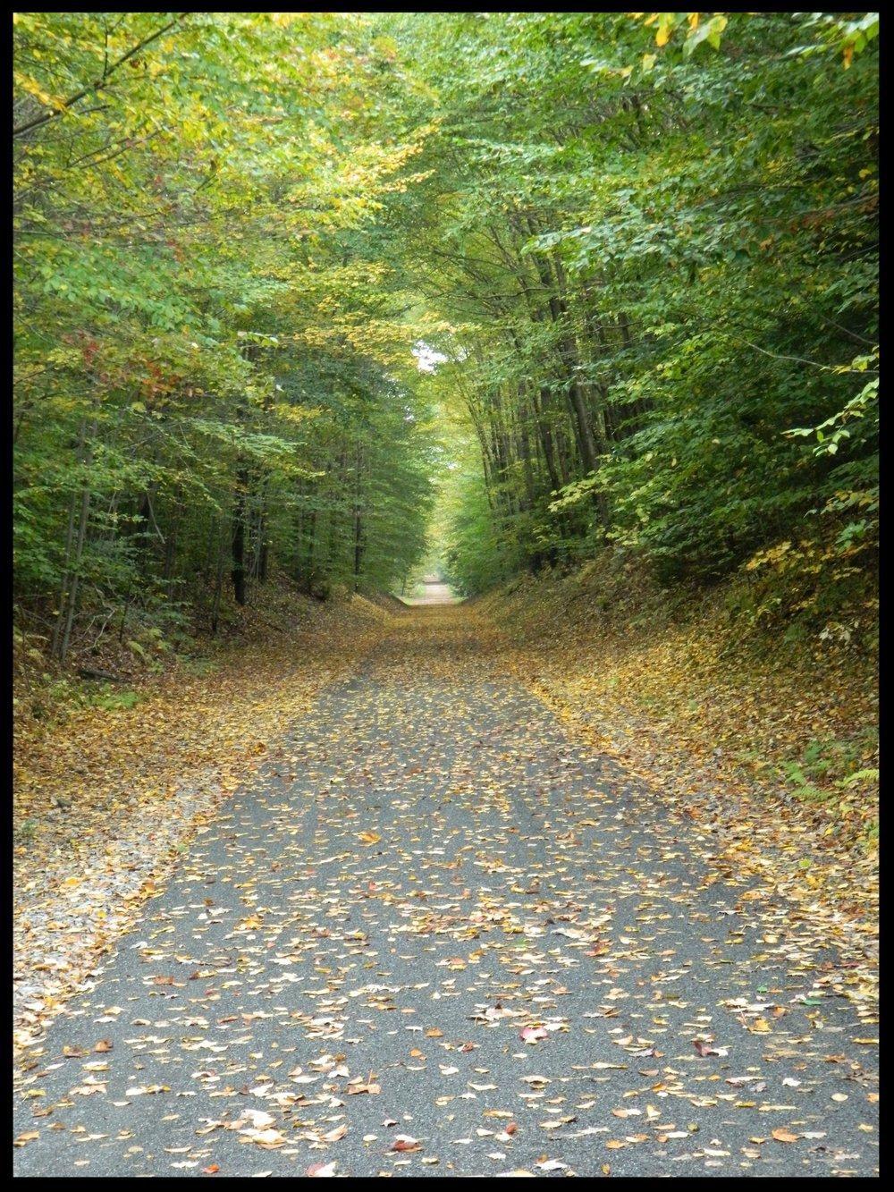 fall trail pic.JPG