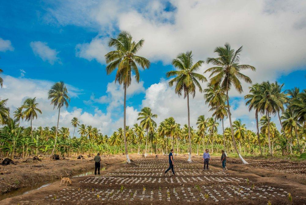 Coconut Nursery 3.jpg