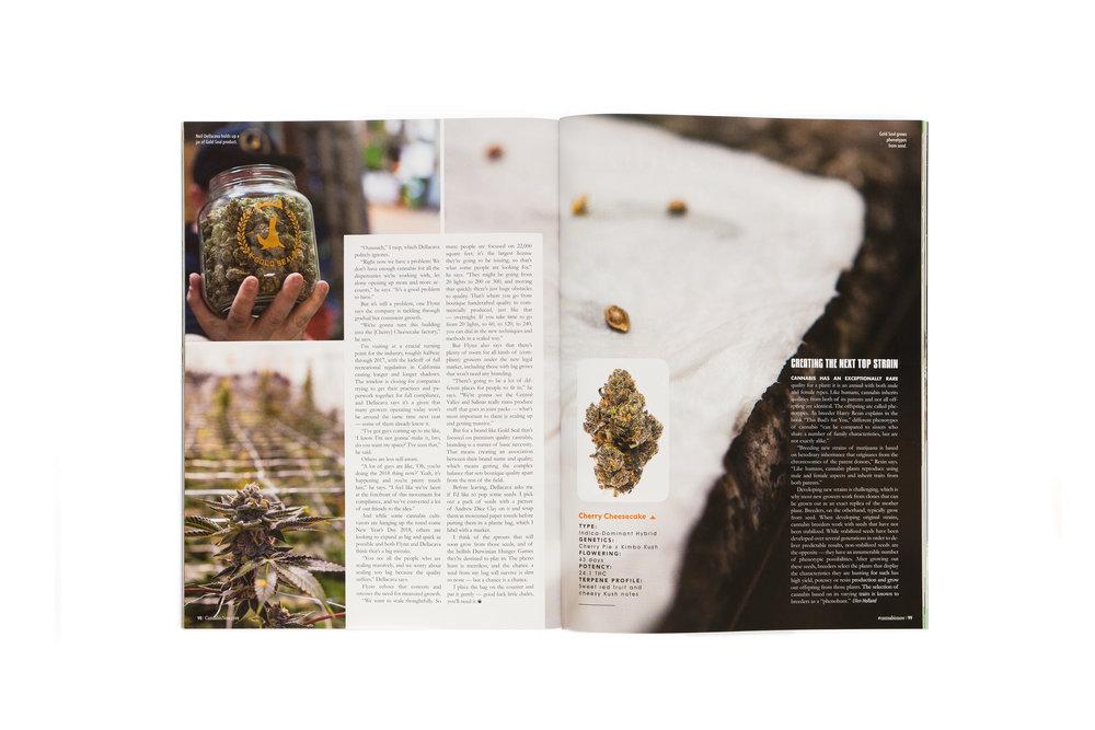 Cannabis-Now-GoldSeal-3pg-5K.jpg