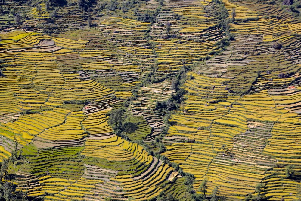 Rice fields down below.