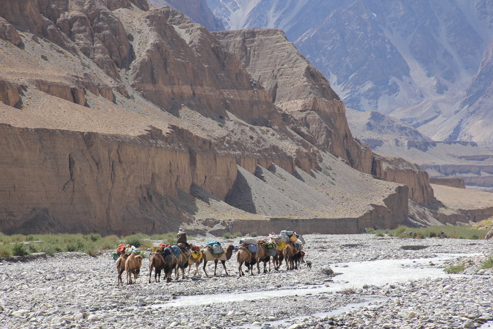 The camel caravan in the river bed of North Karakoram mountains