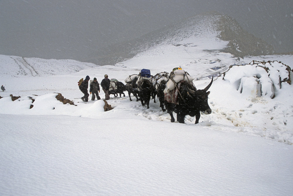 Nara La Pass 4,507m - the last pass in Nepal. The traders use Yaks to transport goods from Tibet to Nepal