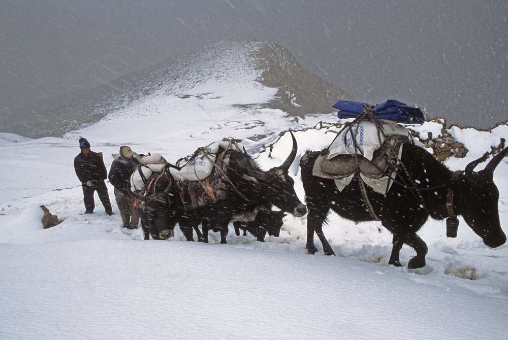 Nara La Pass 4,507m and the caravan of yaks returning from Tibet.