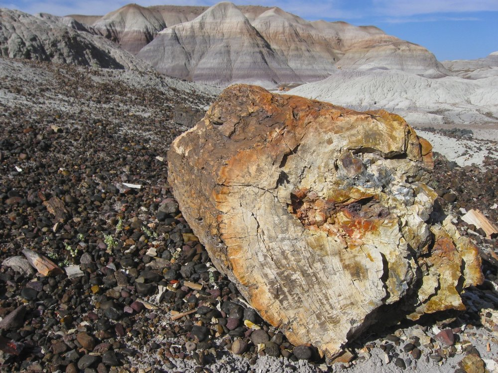 Petrified tree in the Petrified Forrest National Park
