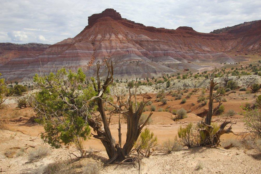 Escalante NP/Paria Wilderness