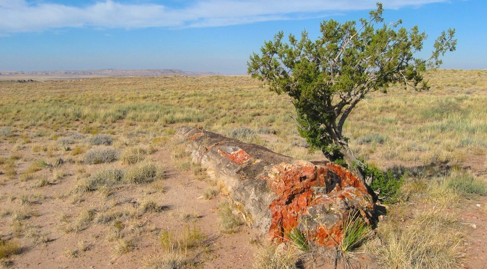 Petrified Forrest National Park in Arizona