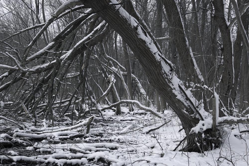 winter23.jpg