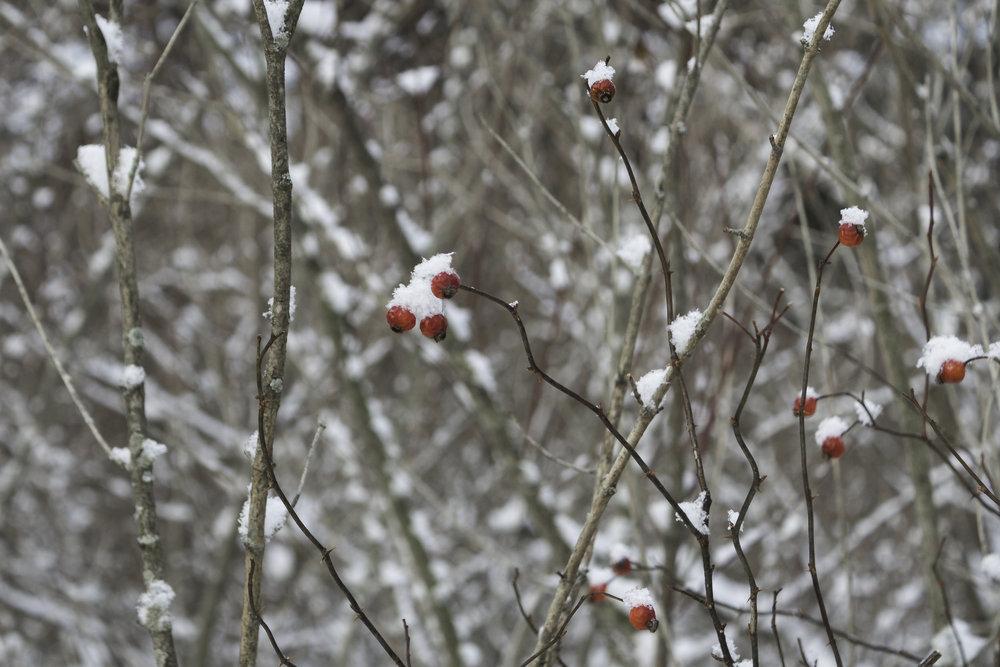winter28.jpg